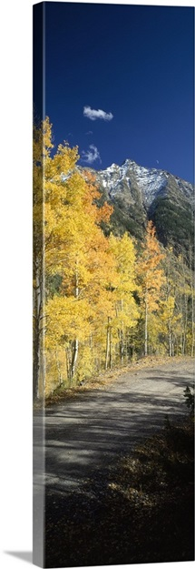 Dirt road passing through autumn forest, San Juan Mountains, Durango, La Plata County, Colorado,