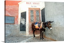 Donkey standing on a street, Fira, Santorini, Cyclades Islands, Greece