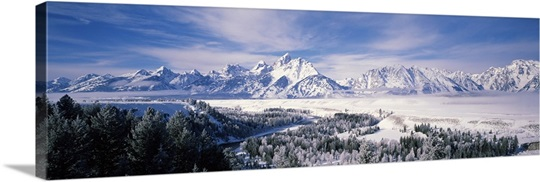 Evergreen trees on a snow covered landscape, Grand Teton National Park, Wyoming