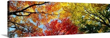 Fall Foliage