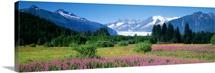 Fireweed Mendenhall Glacier Juneau AK