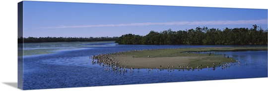 Flock of birds at a lake, J.N. Ding Darling National Wildlife Refuge, Sanibel Island, Florida