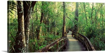 Florida, Fakahatchee Strand State Preserve, Boardwalk at Big Cypress Bend