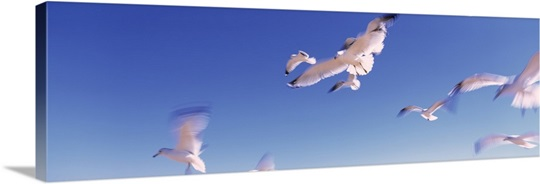Florida, Flagler Beach, Atlantic Ocean, Seagulls flying along Route A1A