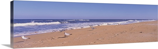 Florida, Seagulls on the beach