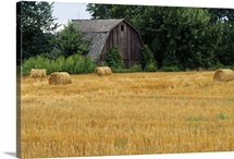 Hay bales in field, weathered barn, Michigan