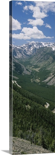 High angle view of a highway through a forest, Beartooth Highway, Beartooth Mountains, Montana