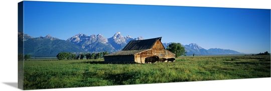 John Moulton Barn in field with bison, Grand Teton National Park, Wyoming