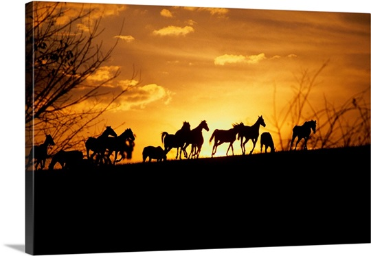 Kentucky, horses running, sunset