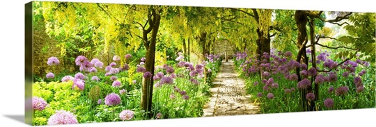 Laburnum Trees At Barnsley House Gardens Gloucestershire England Wall Art Canvas Prints