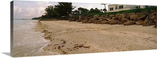 loggerhead turtle caretta caretta tracks on the beach. Black Bedroom Furniture Sets. Home Design Ideas