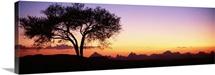 Lone Tree Debre Damo Ethiopia Africa