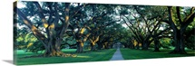 Louisiana, New Orleans, plantation home through alley of oak trees, sunset