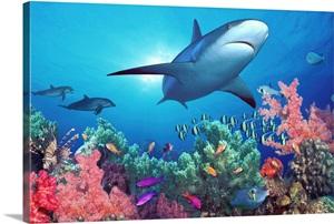 pacific ocean underwater  ... -of-a-shark-swimming-under...