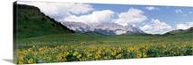 Meadow Rocky Mountain Front MT