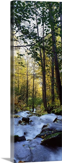 Mist on rocky stream, autumn color forest, Alaska