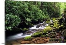 Moss-covered boulders along Roaring Fork, Little Pigeon River, Great Smoky Mountains National Park, Tennessee