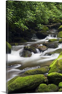 Moss-covered boulders and small cascades along Roaring Fork, Little Pigeon River, Great Smoky Mountains National Park, Tennessee