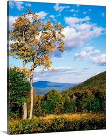 New Hampshire, White Mountain National Forest, Kancamagus Pass, Trees in front of mountains