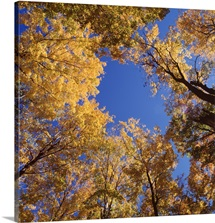New York State, Alleghany State Park, Low angle view of a tree in autumn