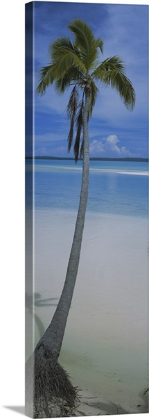 Palm tree on the beach, One Foot Island, Aitutaki, Cook Islands
