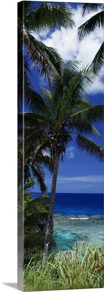 Palm trees on island coast, blue ocean water, Nive Island, South Pacific