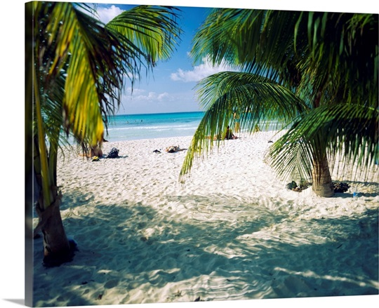 Palm trees on the beach, North Beach, Isla Mujeres, Quintana Roo, Mexico