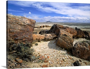 petrified forest natl pk divorced singles dating site Petrified forest natl pk's best 100% free online dating site meet loads of available single women in petrified forest natl pk with mingle2's petrified forest natl pk dating.