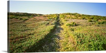 Pathway in a field, Anacapa Island, Channel Islands National Park, California