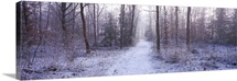 Pathway passing through a forest in winter Bavaria Germany