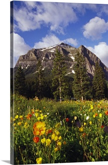 Poppies and wildflowers blooming in front of mountain peak, Alberta, Canada.