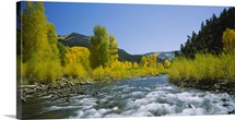 River flowing in the forest, San Miguel River, Colorado