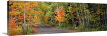 Road passing through a forest, Keweenaw County, Keweenaw Peninsula, Michigan