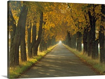 Road w/Autumn Trees Sweden