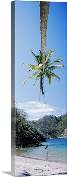 Rope swing hanging from a palm tree, Tortuga, Costa Rica