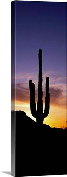 Saguaro Cactus and Sunset Saguaro National Park Arizona