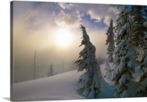 Snow-covered pine trees, sunrise through fog, Oregon Cascades, Oregon, united states,