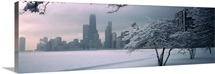 Snow covered tree on the beach with a city in the background, North Avenue Beach, Chicago, Illinois