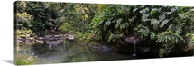 Stream passing through a tropical rainforest, Guadeloupe