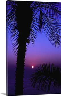 Sunset over pacific ocean, silhouetted palm trees, Costa Rica.
