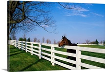 Thoroughbred Horse Lexington KY