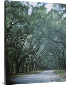 Trees along a road, Savannah, Georgia