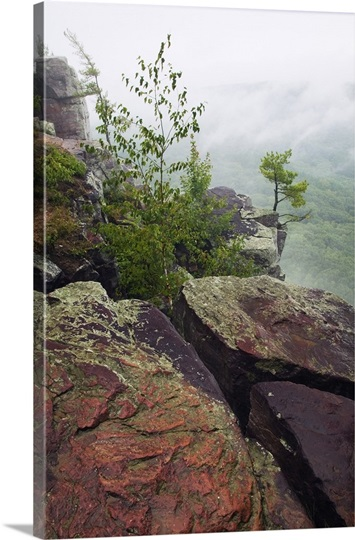 Trees Growing Through Quartzite Rock Boulders On Cliff