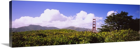 Trees in front of a bridge, Golden Gate Bridge, San Francisco, California