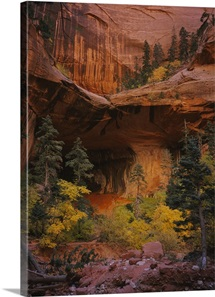 Trees in front of a cave, Zion National Park, Utah