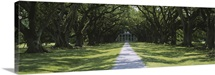 Trees Oak Alley Plantation LA