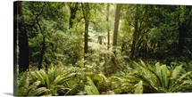 Tropical forest N Isl New Zealand