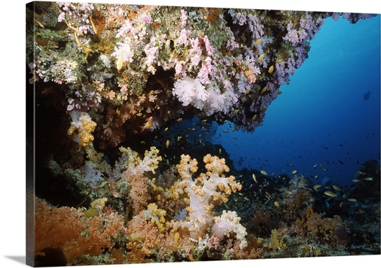 Underwater coral wall with tropical fish and invertebrates, Maldives