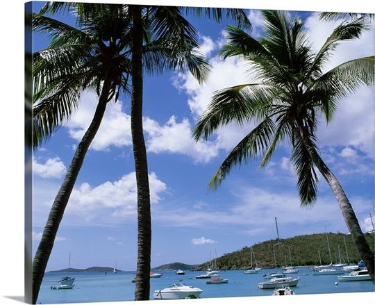 US Virgin Islands, St. John, Cruz Bay, Palm trees on the beach