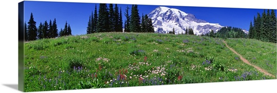Washington, Mount Rainier, meadow